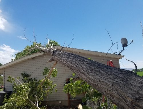 Roof Damage & Roof Material